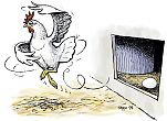 Free Range Organic Hen
