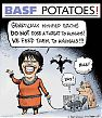 Transgenic BASF potatoes