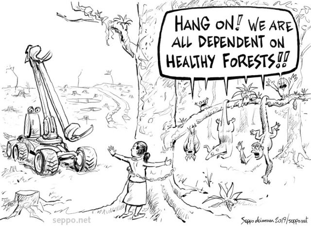 Human health is connected with forests