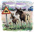 Moose and traffic jam