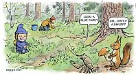Picking blueberries in old-growth forest