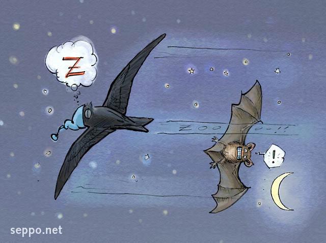 http://www.seppo.net/cartoons/albums/cartoons/nature/birds/birds_tervapaasky_nukkuu_en.jpg