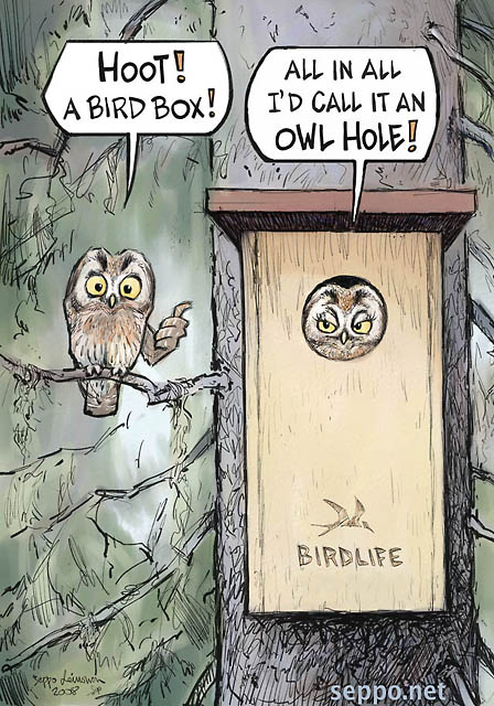 Bird box - Boreal owl