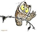 Boreal Owl listening