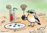 Wheatear having insect meal