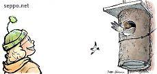 Common Goldeneye in birdhouse