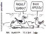 haggis_gull_glasgow_e.jpg