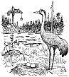 Crane vs. crane