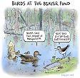 Birds nesting at the beaver pond