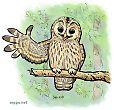 Tawny owl greeting