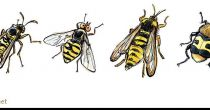 Wasp and look-alike friends