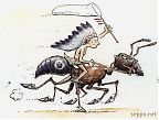Indian riding Carpenter ant