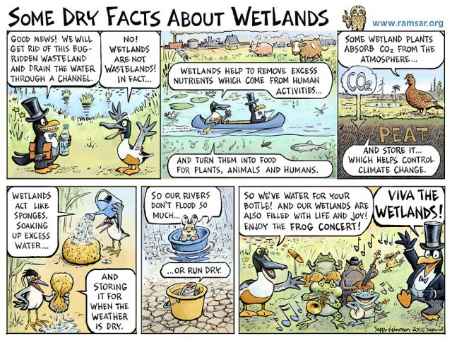Some dry facts of wetlands