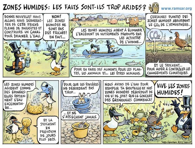 Les zones humides 