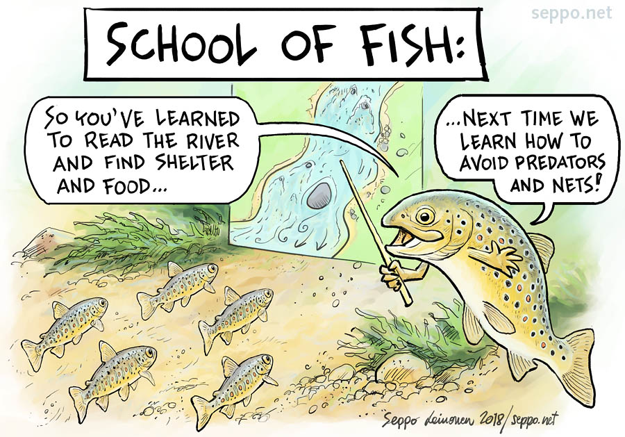 Education - school of fish