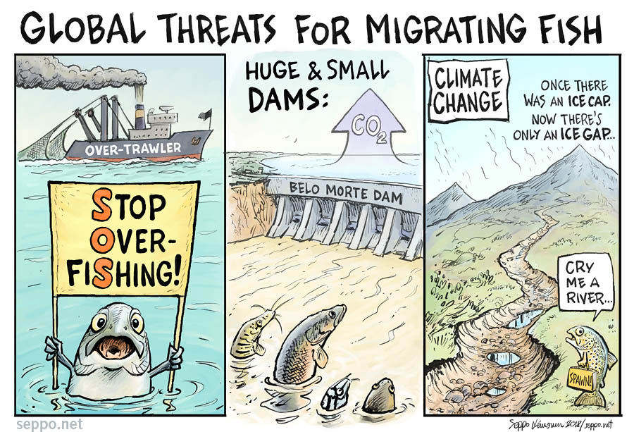 Global threats for migrating fish