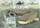 Wels catfish and funny relatives