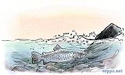 Brown Trout in white water