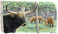 Herd of Aurochs in Ancient Europe