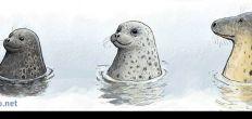 Seals in Baltic Sea