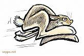 Hare runs