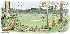 Red fox – vixen and kits on edge of swamp