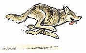 Wolf runs