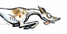 Sighthound runs