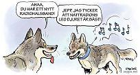 Viltforskning – vargar med GPS-halsband