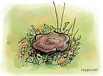 Velvet-top fungus – dyer's polypore