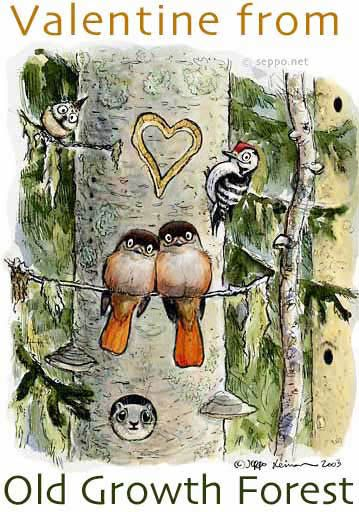 Valentine from Old Growth Forest
