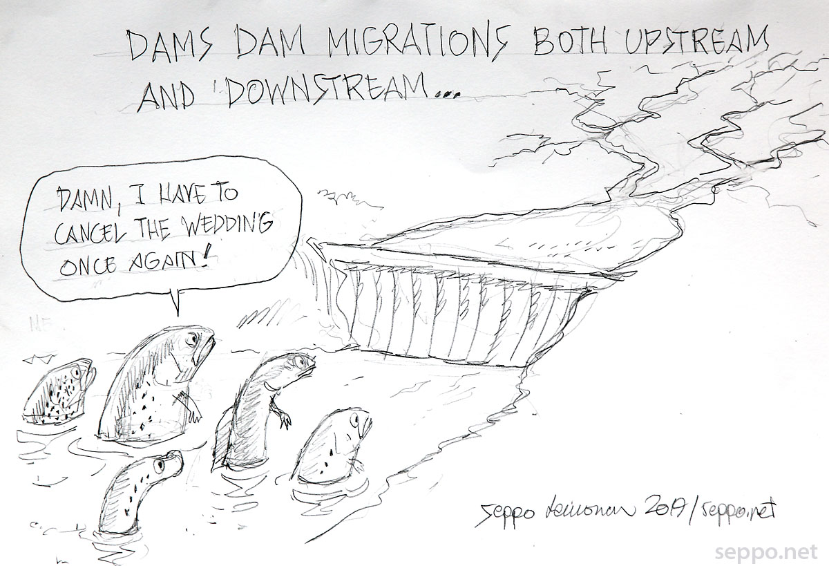 Dams dam migration both upstream and downstream