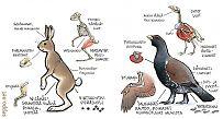 Vertaileva anatomia – nisäkäs ja lintu