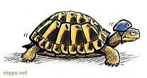 Kilpikonna ja kypärä