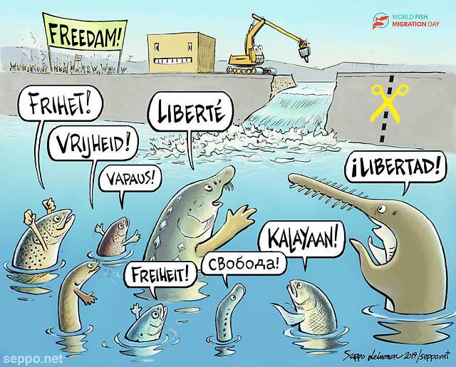 Vaelluskalat vapaus ja padon purkaminen