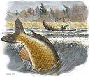 Kalastaja ja jättikarppi