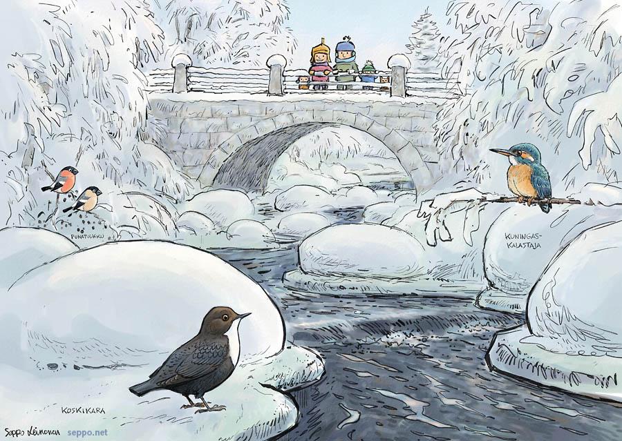 Koskikara ja kuningaskalastaja talvisella joella