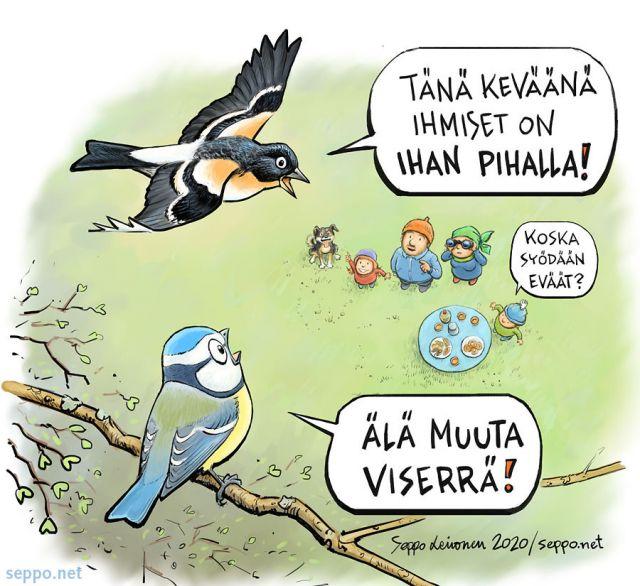 Birdlife - Pihojen taisto