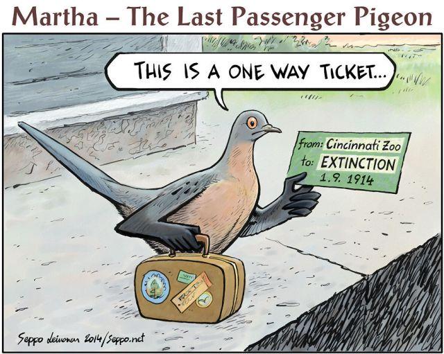 Martta - viimeinen muuttokyyhky