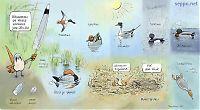 Lintujen höyhenpuku – monikäyttöasu