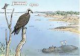 Kalasääski Afrikassa