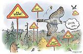 Kanahaukka ja lintujen varoitusäänet