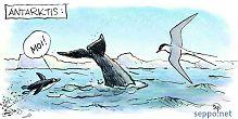 Lapintiira muuttaa talveksi Antarktikselle