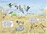 Linnut – linnustonsuojelualue – syysmuutto