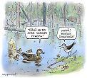 Majavalampi - linnut ruokailevat