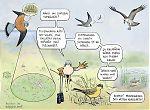 Linnut ja tarkka näköaisti
