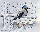 Varis - talvi