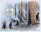 Luonto palaa metsäpalon jälkeen