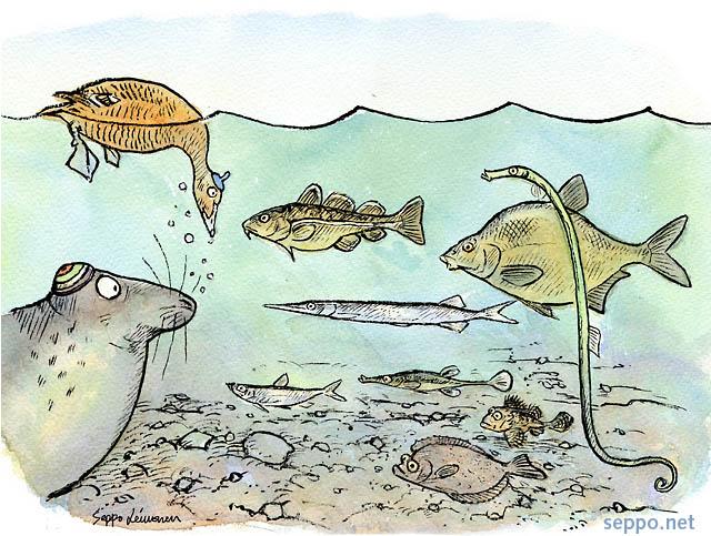 Monimuotoisuus - kalat