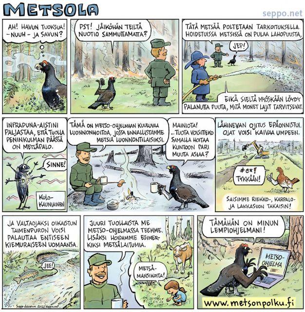 Metso-ohjelma - ennallistaminen ja luonnonhoito